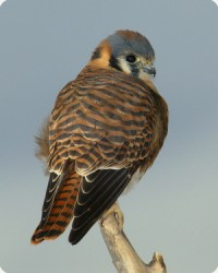 New Year birding tour (photos by Audubon Soc, Wikipedia)