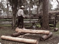 shaping logs 3